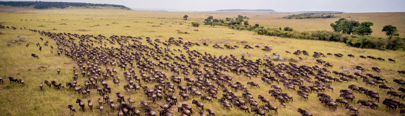 Tanzania Safari Packages, Tanzania Tour Operators