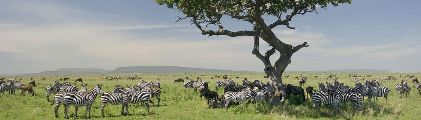 Tanzania Safari Packages, Tanzania Tour Operators e
